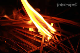 burning palm branches